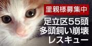 猫の里親をさがす会ロゴ.jpg