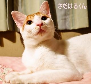 猫の里親をさがす会写真.jpg